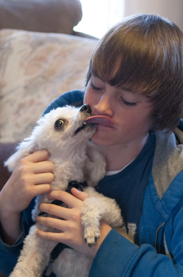 Peyton, a toy poodle, licks Dakota Foreman on Wednesday, April 3, 2013, at the Foremans\' home in Lafayette. The Focosi family found Peyton and used his embedded chip to find his owners.